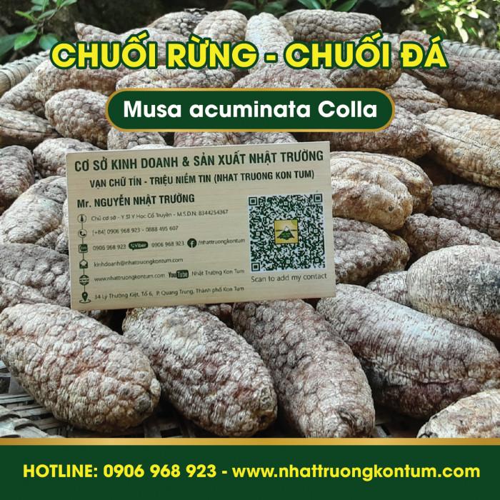 Chuối Hột Đá - Chuối Rừng Kon Tum - Musa acuminata Colla Kon Tum Vietnam - Túi 1kg