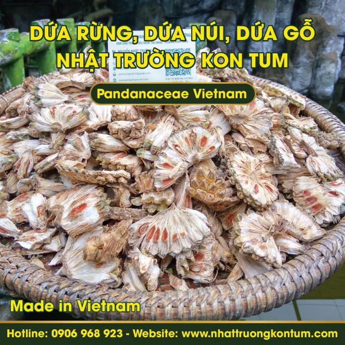 Dứa rừng, Dứa núi, Dứa gỗ Kon Tum Tây Nguyên Việt Nam - Pandanaceae Kon Tum Vietnam - Túi 1 kg
