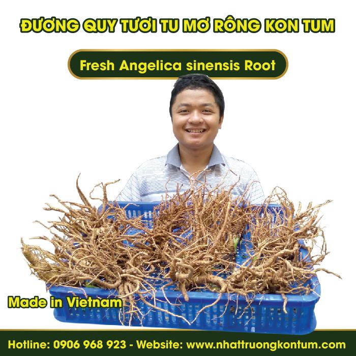 Đương Quy Tươi Tu Mơ Rông Ngọc Linh Kon Tum - Fresh Angelica sinensis - Túi 1kg