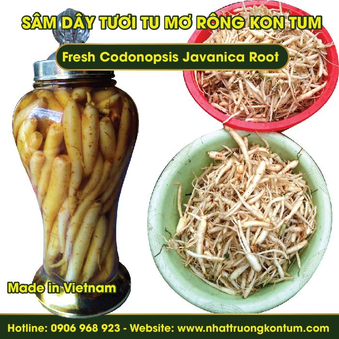 Sâm Dây Tươi (Hồng Đẳng Sâm) Tu Mơ Rông Ngọc Linh Kon Tum - Fresh Codonopsis Javanica - Túi 1kg