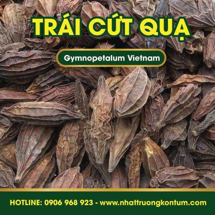 Trái Cứt Quạ - Khổ Qua Rừng - Gymnopetalum Vietnam - Túi 1kg