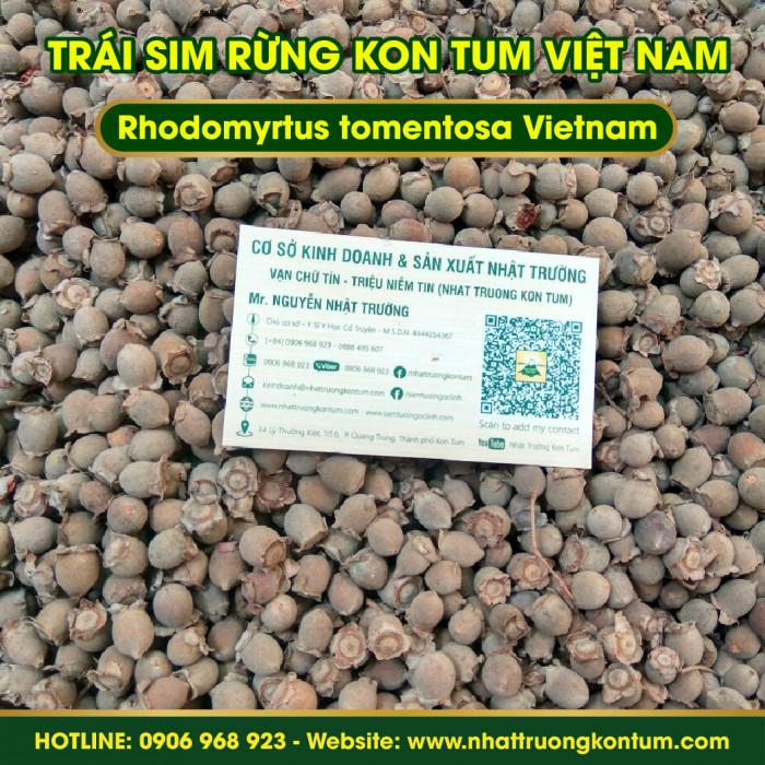 Trái Sim Rừng Khô Nhật Trường Kon Tum - Rhodomyrtus tomentosa - Túi 1kg